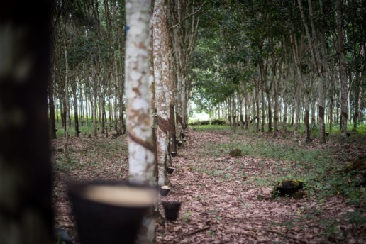 Why Rubber Must be Kept in the EU's Anti-Deforestation Law
